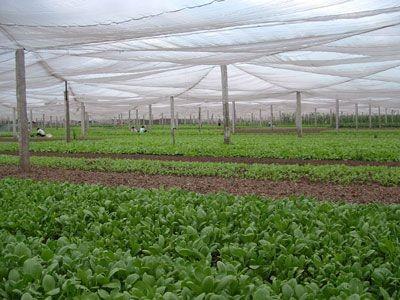 Деревня по выращиванию овощей Тхюи Линь - ảnh 1