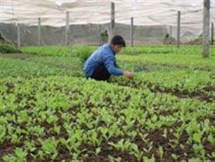 Деревня по выращиванию овощей Тхюи Линь - ảnh 2