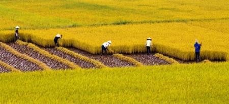 Широкое распространение модели больших полей в стране - ảnh 1