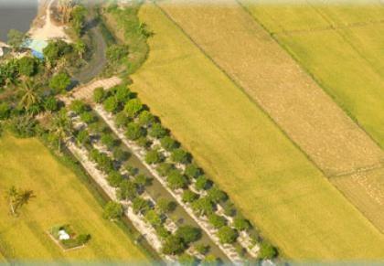 Широкое распространение модели больших полей в стране - ảnh 3