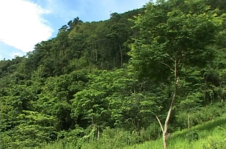 Cтроительство новой деревни в горной общине Хуойленг провинции Диенбиен - ảnh 3