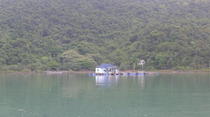 Выращивание морепродуктов в островном уезде Вандон провинции Куангнинь - ảnh 1