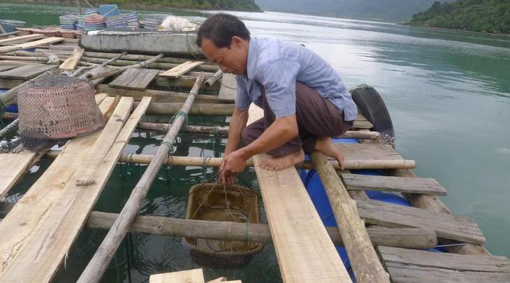 Выращивание морепродуктов в островном уезде Вандон провинции Куангнинь - ảnh 2