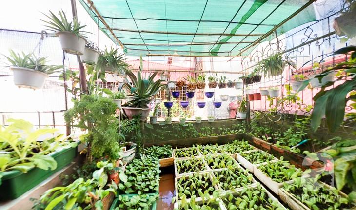 Тенденция выращивания овощей на городских крышах - ảnh 1