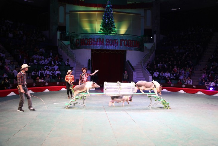 Программа «Новогодняя ёлка» в Ханое - ảnh 6