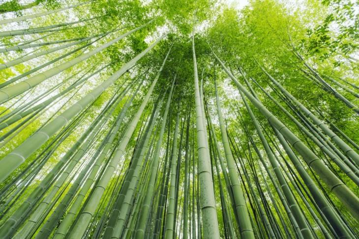 Мукангчай вошёл в список самых красочных мест на планете - ảnh 5