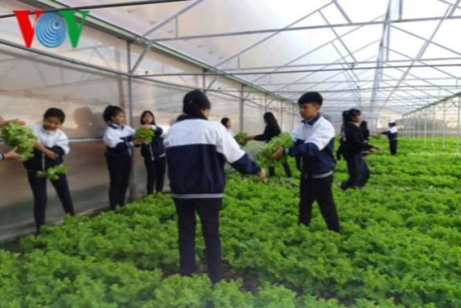 Школьники в провинции Ламдонг занимаются высокотехнологичным сельским хозяйством - ảnh 1