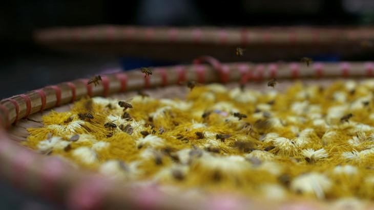 Ханойский лотосовый чай - утончённый вкус и изысканный аромат - ảnh 24