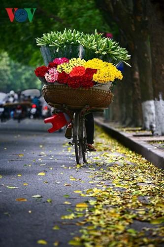 Tháng tư, hoa loa kèn về trên phố - ảnh 4