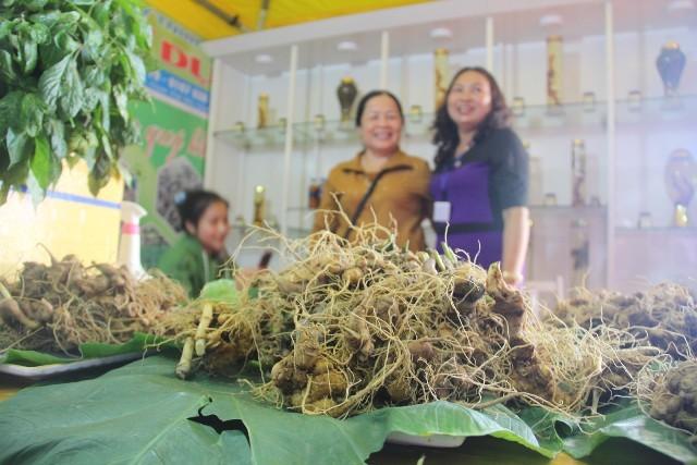 Lễ hội sâm Ngọc Linh tại  Quảng Nam  - ảnh 1
