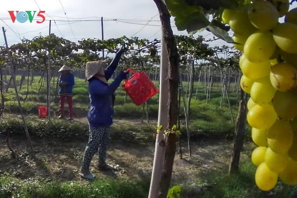 Pertanian memperkuat kemampuan mencegah dan menanggulangi perubahan iklim - ảnh 1