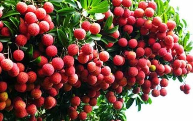 Hasil pertanian Vietnam berupaya menaklukkan pasar Perancis - ảnh 1