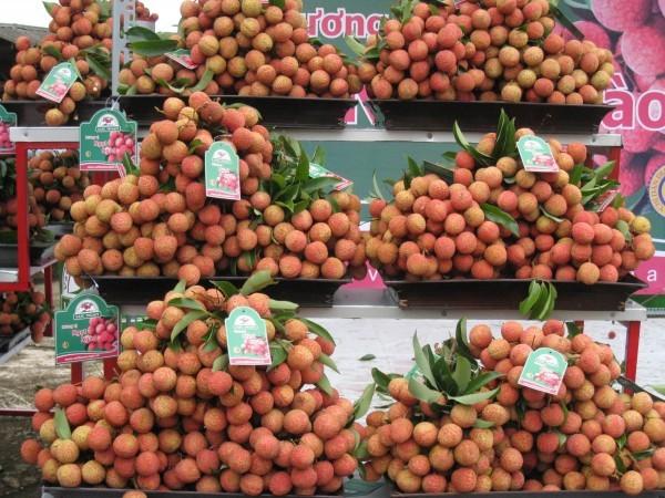 Memperkenalkan buah leci yang segar di Vietnam - ảnh 1