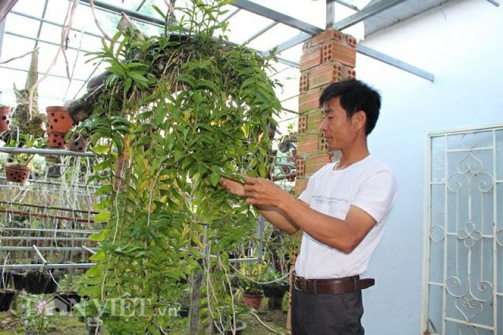 Memperkenalkan sepintas lintas tentang hobi main bunga anggrek di Vietnam - ảnh 1