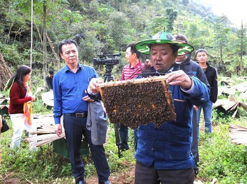 Pola penanaman sayuran aman dan pembubidayaan lebah madu membantu petani mengentas dari kemiskinan di Propinsi Ha Giang - ảnh 1