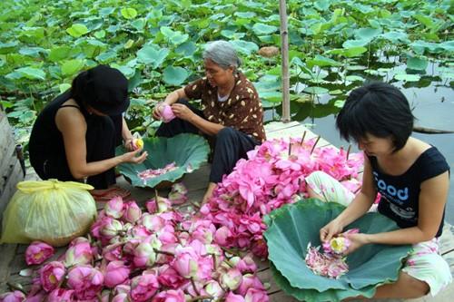 Memperkenalkan sepintas lintas tentang teh teratai Vietnam  - ảnh 2