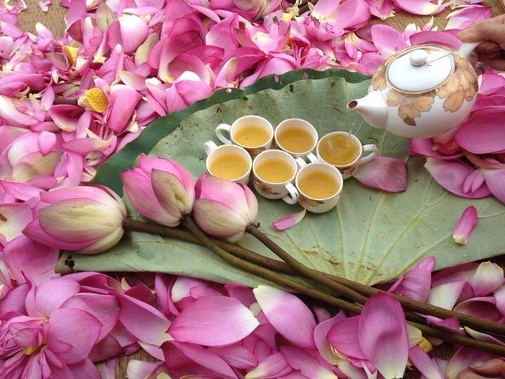 Memperkenalkan sepintas lintas tentang teh teratai Vietnam  - ảnh 1