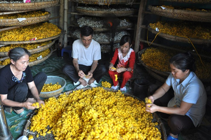 Kerajinan menanam pohon murbei dan budidaya ulat sutra di Kabupaten Thieu Hoa, Propinsi Thanh Hoa - ảnh 2