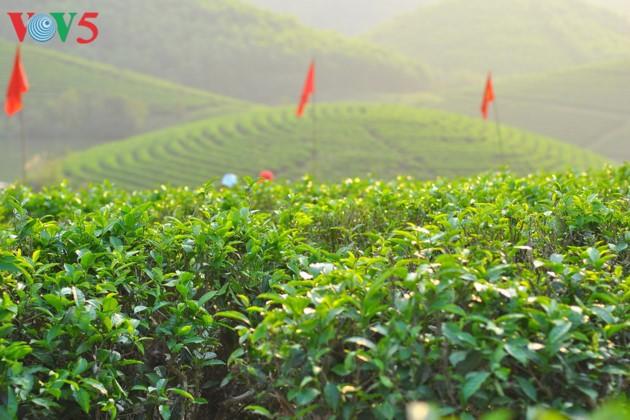 Pulau teh Thanh Chuong menyerap kedatangan wisatawan sehubungan dengan Hari Raya Tet - ảnh 8