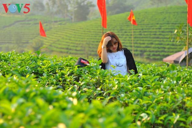 Pulau teh Thanh Chuong menyerap kedatangan wisatawan sehubungan dengan Hari Raya Tet - ảnh 9