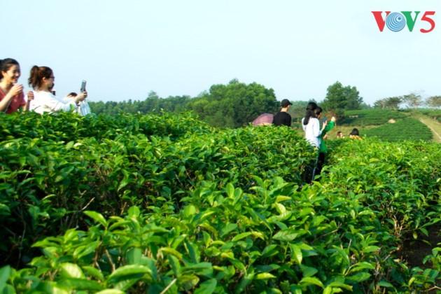 Pulau teh Thanh Chuong menyerap kedatangan wisatawan sehubungan dengan Hari Raya Tet - ảnh 10