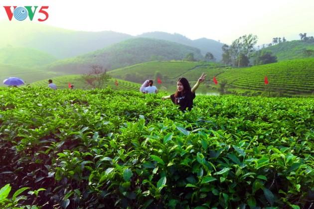 Pulau teh Thanh Chuong menyerap kedatangan wisatawan sehubungan dengan Hari Raya Tet - ảnh 11