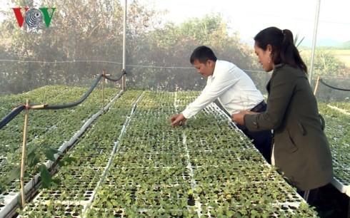 Desa Ba Na pertama di Provinsi Gia Lai  melakukan pertanian teknologi tinggi - ảnh 1