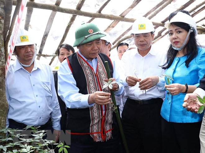 Ngoc Linh ginseng is Vietnam's national treasure: PM - ảnh 1