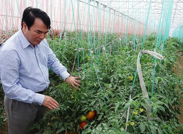 日本帮助林同省成为东南亚高价值农业中心  - ảnh 1