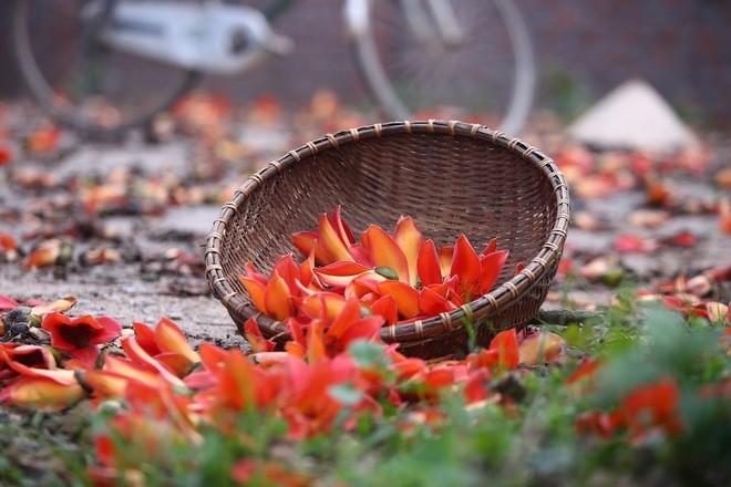 一组有关河内及西北省份3月花季的歌曲 - ảnh 2