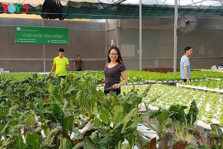 西部女企业家水培种菜模式效益显著 - ảnh 2