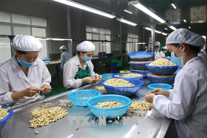 越南与印度推动农业合作新愿景 - ảnh 1