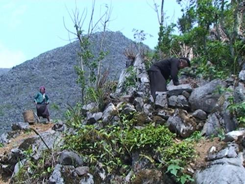 赫蒙族的石缝耕作技术让岩石也开了花 - ảnh 1