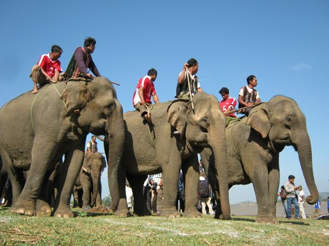 Народность М'Нонг до сих пор сохраняет традицию поклонения культу Слона  - ảnh 1