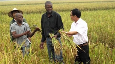Активизация народной дипломатии между Вьетнамом и Сообществом развития Юга Африки - ảnh 1
