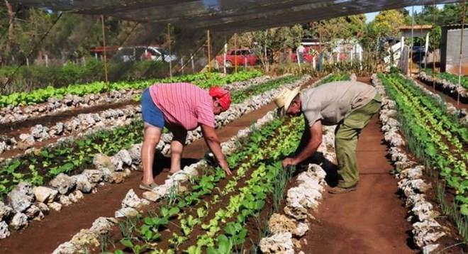 Куба призвала США воспользоваться потенциалом сотрудничества в области сельского хозяйства между двумя странами - ảnh 1