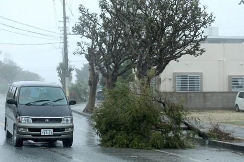 Typhoon Trami hits Japan, killing 2 - ảnh 1