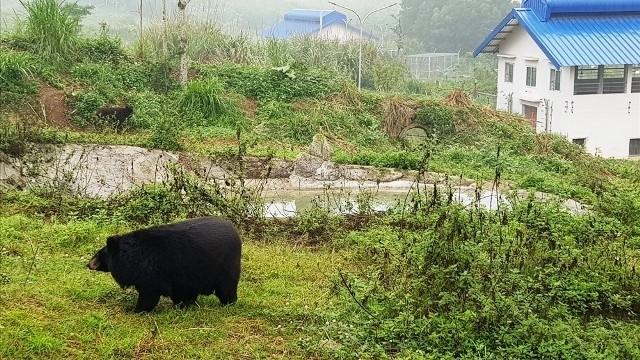 Ninh Binh sanctuary saves bears from bile farming  - ảnh 2