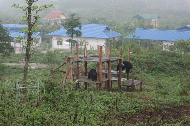 Ninh Binh sanctuary saves bears from bile farming  - ảnh 3