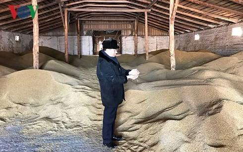Vietnamese farm owner shines in Russian region - ảnh 1