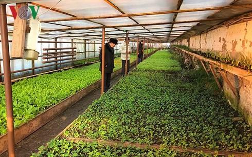 Vietnamese farm owner shines in Russian region - ảnh 2