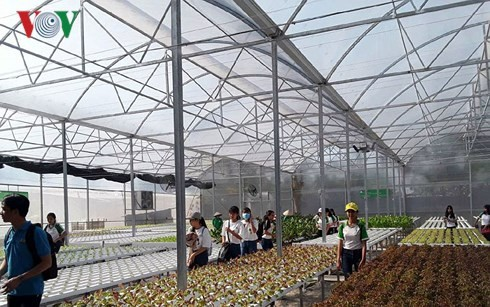 Ambitious businesswoman pioneers hydroponic vegetable growing in Can Tho - ảnh 2