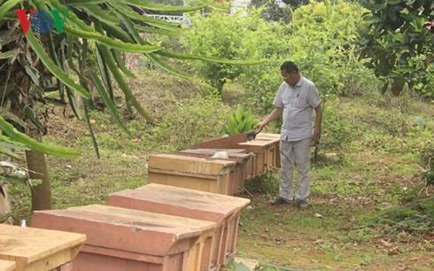 Son La farmer prosper from bee-keeping - ảnh 2