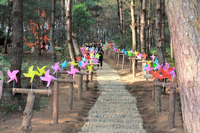 Sin Suoi Ho village, Ta Leng pine forest features magnificent scenery, ethnic culture - ảnh 5