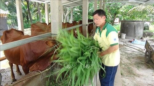Poor man becomes role model of agricultural production  - ảnh 1