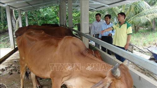 Poor man becomes role model of agricultural production  - ảnh 2