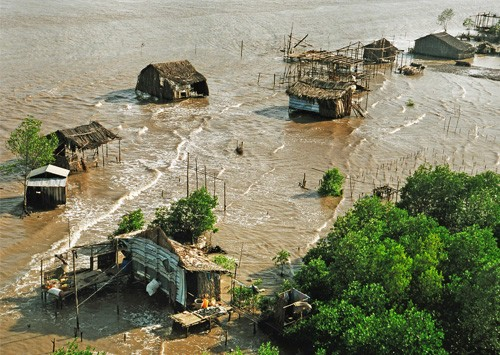 Trồng rừng ngập mặn thích ứng với biến đổi khí hậu  - ảnh 1