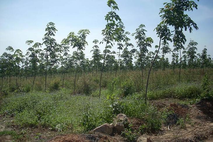 Tăng cường công tác bảo vệ và phát triển rừng - ảnh 1