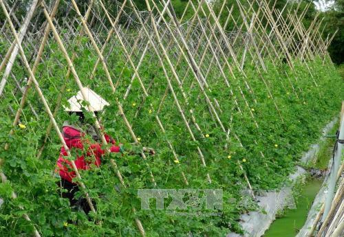 Thu hẹp khoảng cách giàu nghèo  mục tiêu của Việt Nam trong chặng đường phát triển mới - ảnh 1