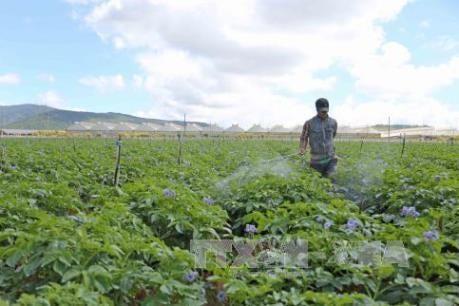 Doanh nghiệp Hàn Quốc khảo sát đầu tư sản xuất, chế biến nông sản tại Hà Nam  - ảnh 1